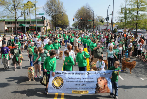 About Us Golden Retriever Rescue Club Of Charlotte
