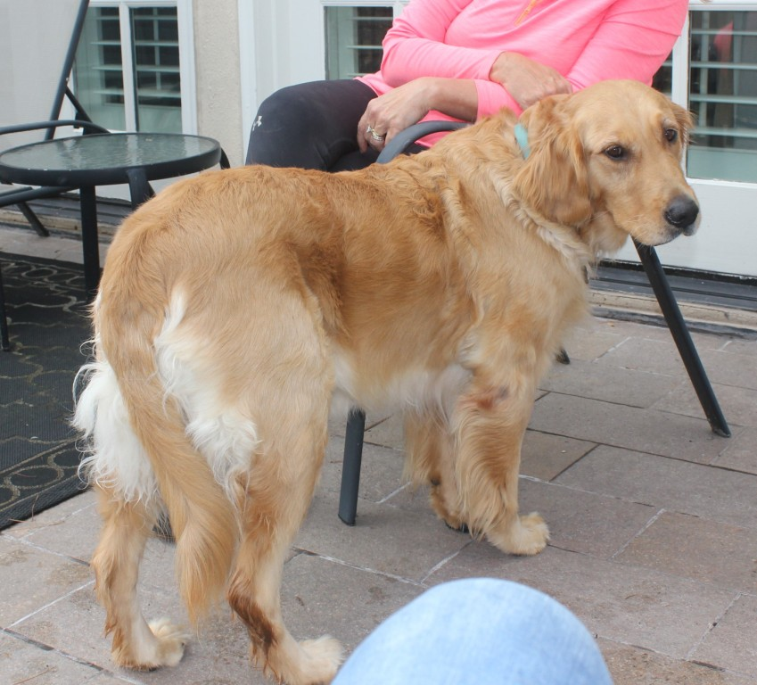 Jazzy – Adopted