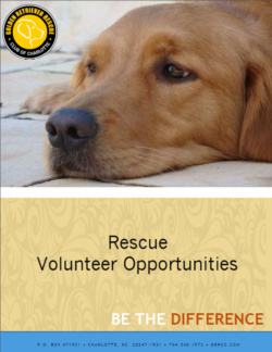 Volunteer Brochure Image