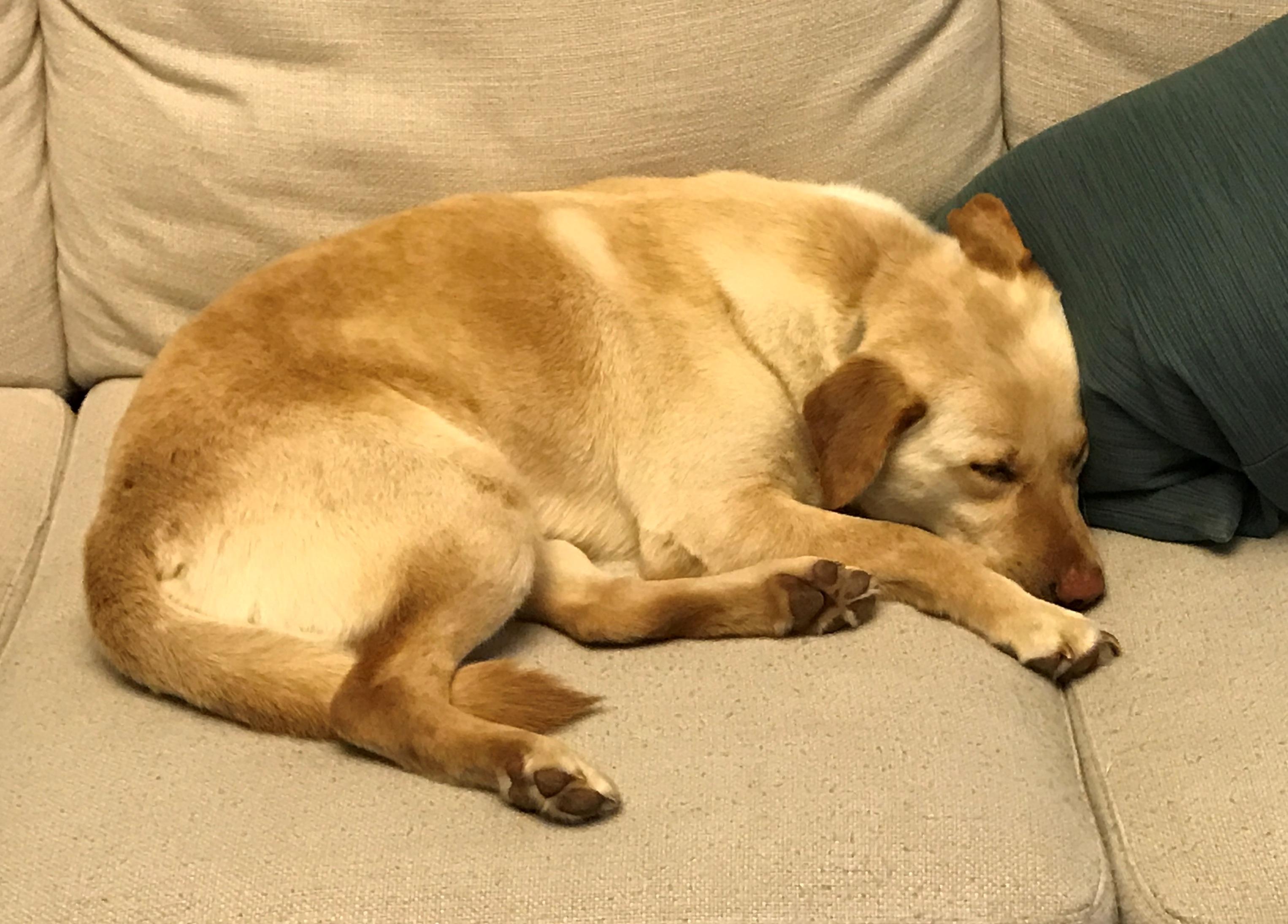 Sasha – Adopted
