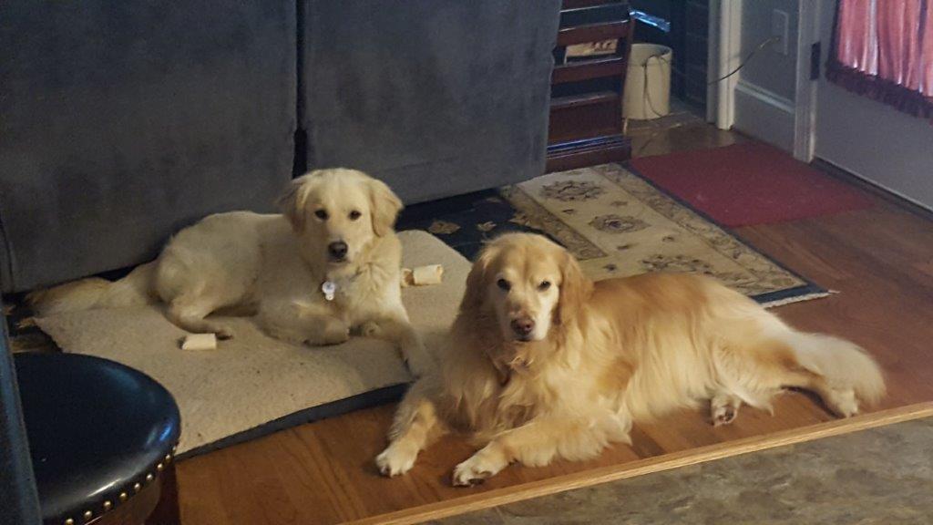 Dakota – Adopted