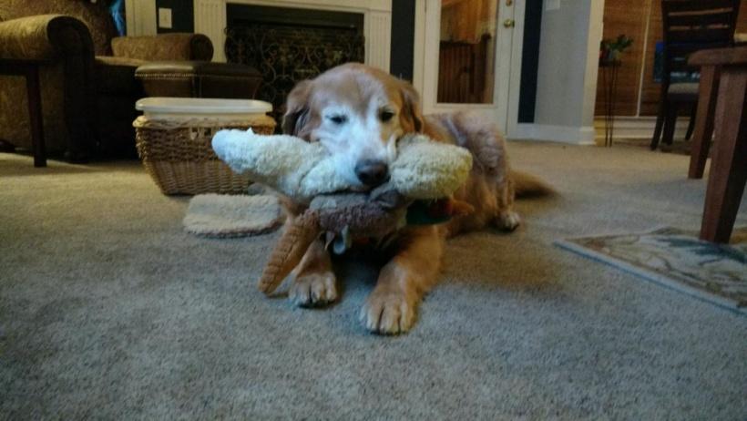 Marley – Adopted