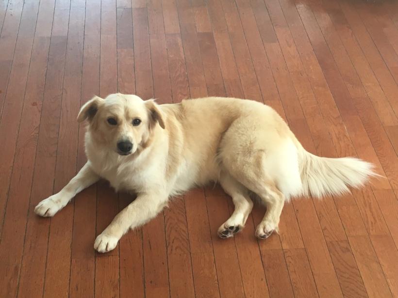 Elsa – Adopted