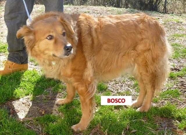 Bosco – Adopted