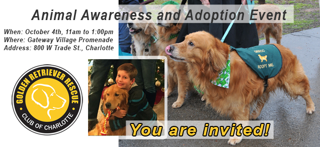 adoption-awareness-header_1004