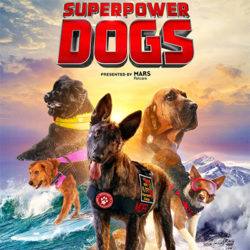 Superpower Dogs at IMAX!