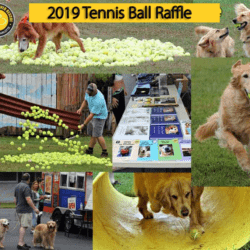 2019 Tennis Ball Raffle Save the Date