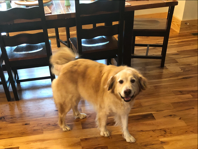 Cooper – Adopted