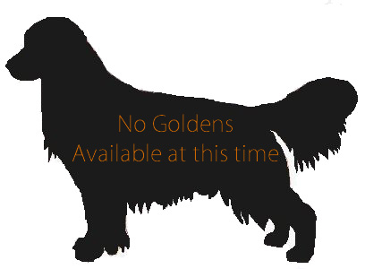 No Goldens Available at this time