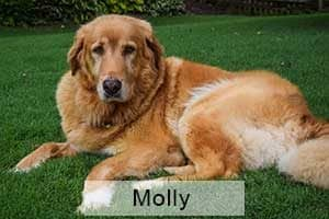 GRRCC Molly