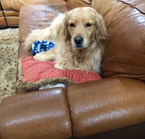 Duke – Adoption Pending