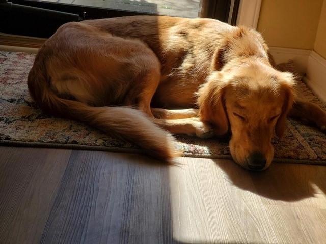 Sadie – Applications Closed